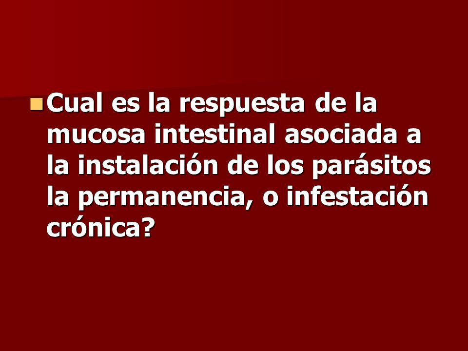 Cual es la respuesta de la mucosa intestinal asociada a la instalación de los parásitos la permanencia, o infestación crónica.