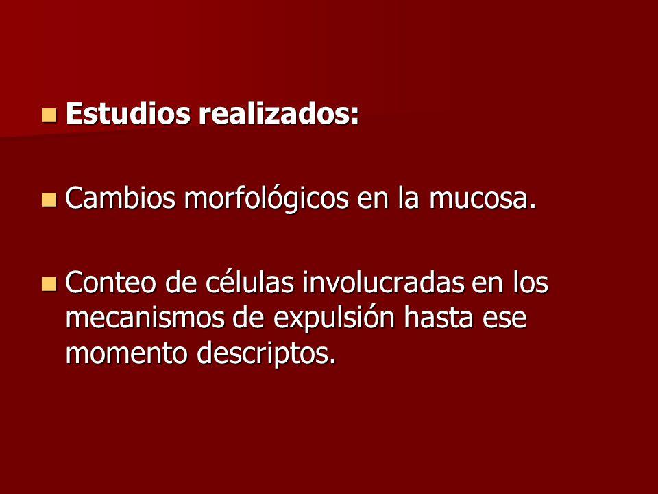 Estudios realizados: Estudios realizados: Cambios morfológicos en la mucosa.