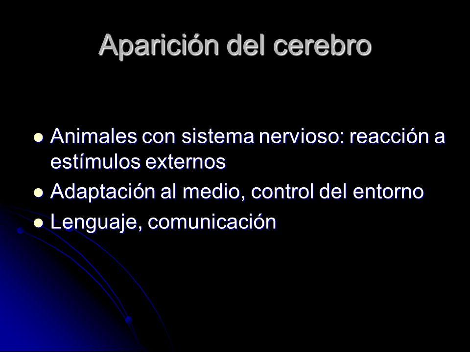 Aparición del cerebro Animales con sistema nervioso: reacción a estímulos externos Animales con sistema nervioso: reacción a estímulos externos Adaptación al medio, control del entorno Adaptación al medio, control del entorno Lenguaje, comunicación Lenguaje, comunicación