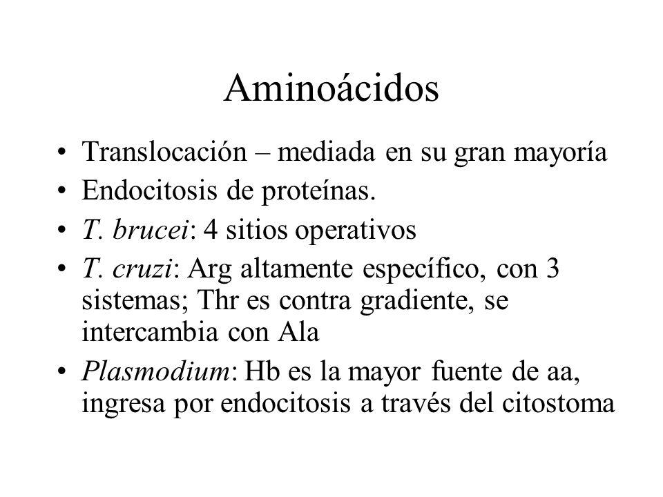 Aminoácidos Translocación – mediada en su gran mayoría Endocitosis de proteínas. T. brucei: 4 sitios operativos T. cruzi: Arg altamente específico, co