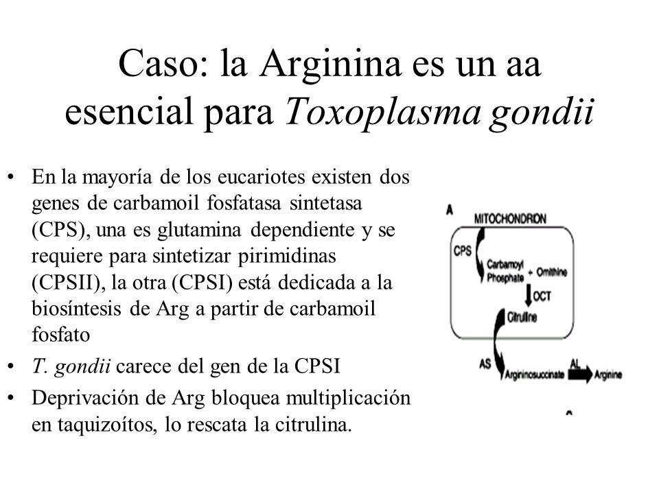 Caso: la Arginina es un aa esencial para Toxoplasma gondii En la mayoría de los eucariotes existen dos genes de carbamoil fosfatasa sintetasa (CPS), una es glutamina dependiente y se requiere para sintetizar pirimidinas (CPSII), la otra (CPSI) está dedicada a la biosíntesis de Arg a partir de carbamoil fosfato T.