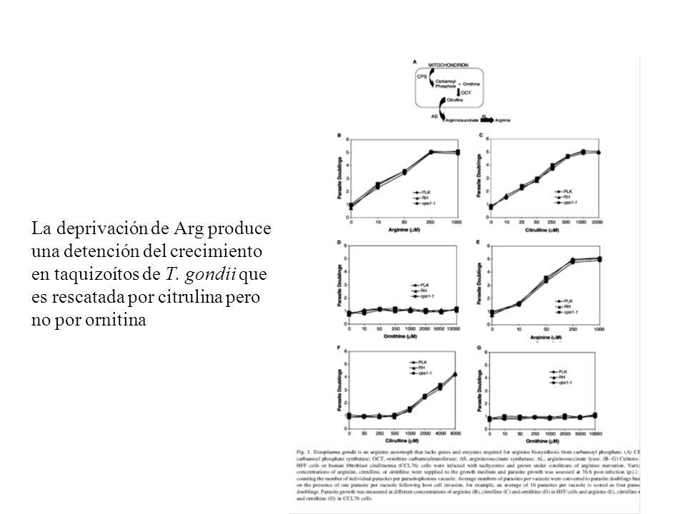 La deprivación de Arg produce una detención del crecimiento en taquizoítos de T. gondii que es rescatada por citrulina pero no por ornitina