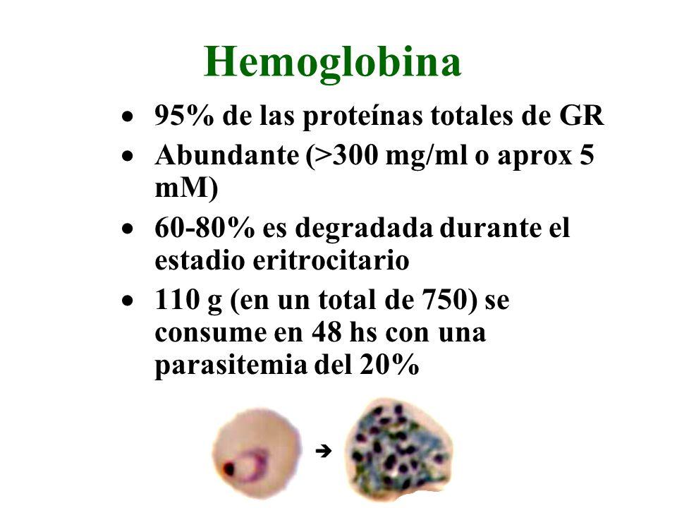 Hemoglobina 95% de las proteínas totales de GR Abundante (>300 mg/ml o aprox 5 mM) 60-80% es degradada durante el estadio eritrocitario 110 g (en un total de 750) se consume en 48 hs con una parasitemia del 20%