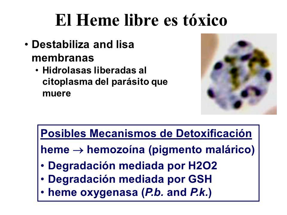Destabiliza and lisa membranas Hidrolasas liberadas al citoplasma del parásito que muere El Heme libre es tóxico Posibles Mecanismos de Detoxificación heme hemozoína (pigmento malárico) Degradación mediada por H2O2 Degradación mediada por GSH heme oxygenasa (P.b.