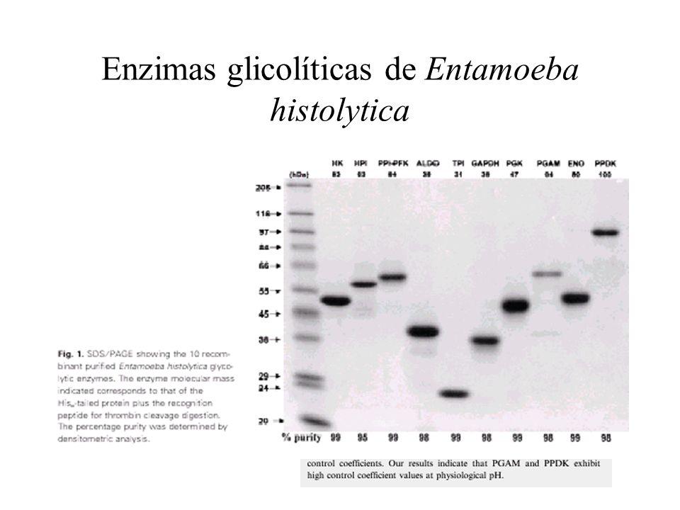 Enzimas glicolíticas de Entamoeba histolytica