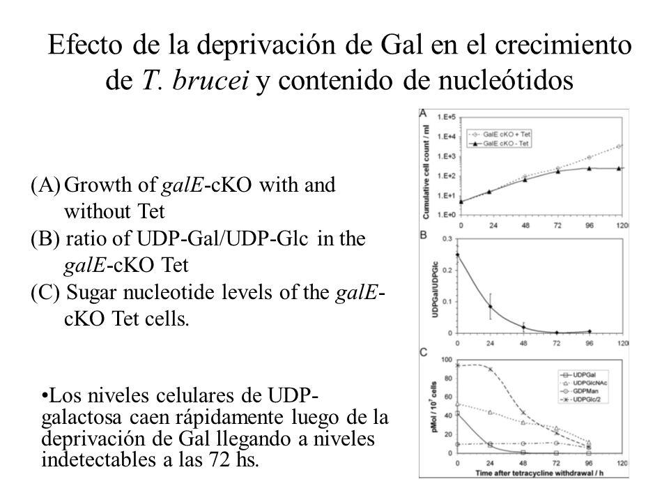Efecto de la deprivación de Gal en el crecimiento de T. brucei y contenido de nucleótidos (A)Growth of galE-cKO with and without Tet (B) ratio of UDP-