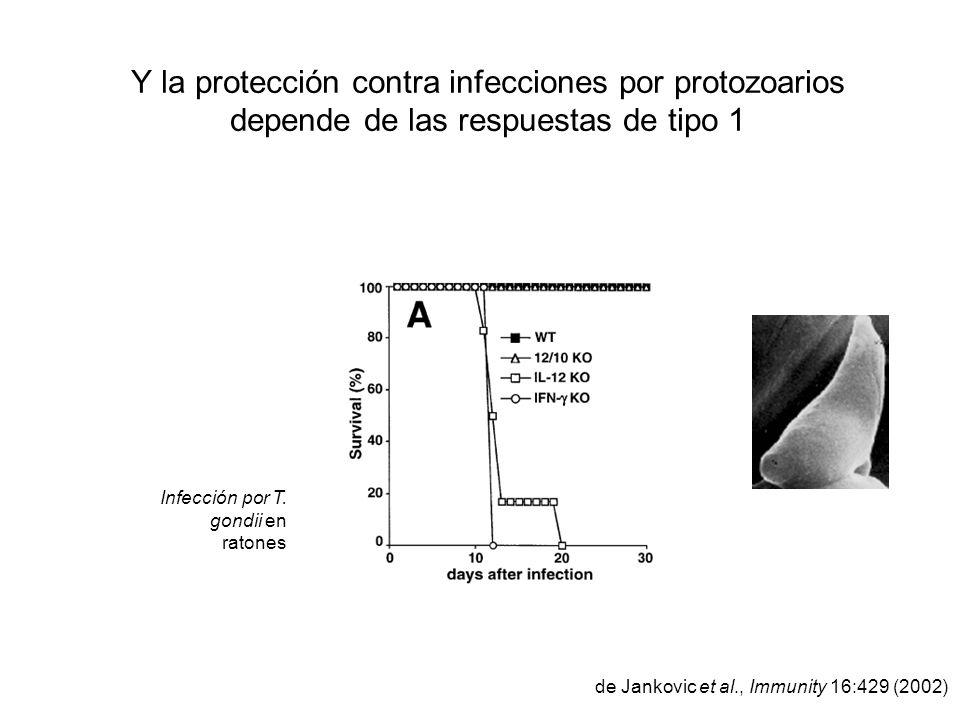 Y la protección contra infecciones por protozoarios depende de las respuestas de tipo 1 de Jankovic et al., Immunity 16:429 (2002) Infección por T. go