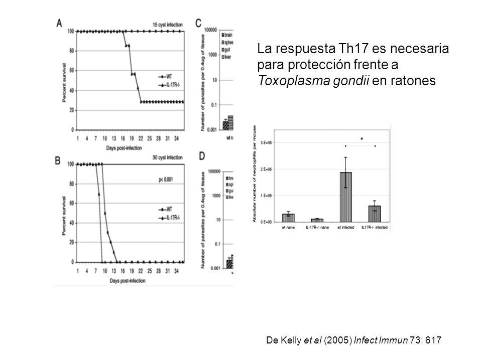 La respuesta Th17 es necesaria para protección frente a Toxoplasma gondii en ratones De Kelly et al (2005) Infect Immun 73: 617