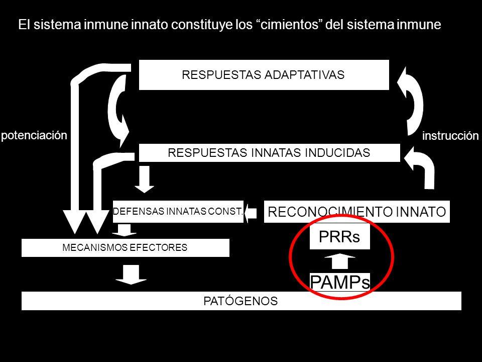 PATÓGENOS RECONOCIMIENTO INNATO RESPUESTAS INNATAS INDUCIDAS RESPUESTAS ADAPTATIVAS DEFENSAS INNATAS CONST. PRRs PAMPs MECANISMOS EFECTORES instrucció