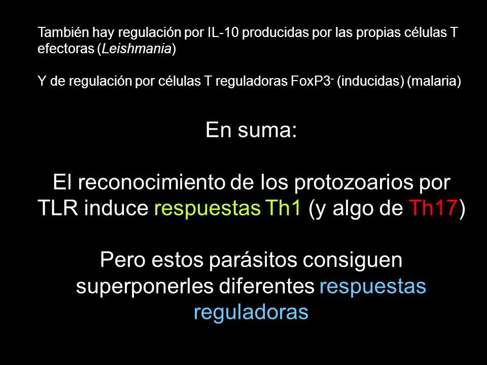 También hay regulación por IL-10 producidas por las propias células T efectoras (Leishmania) Y de regulación por células T reguladoras FoxP3 - (induci