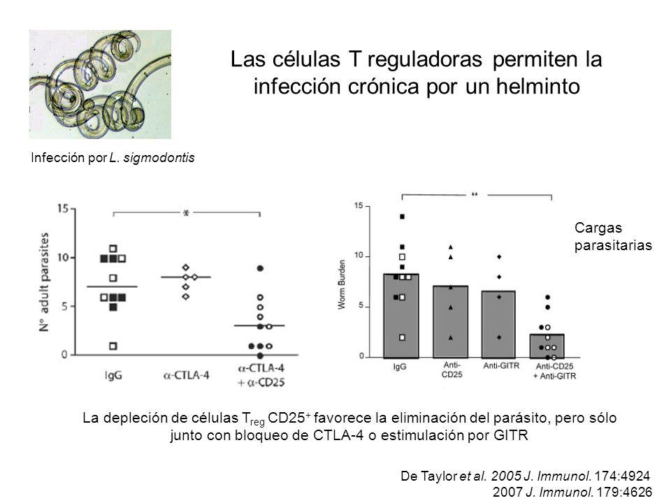 Cargas parasitarias La depleción de células T reg CD25 + favorece la eliminación del parásito, pero sólo junto con bloqueo de CTLA-4 o estimulación po