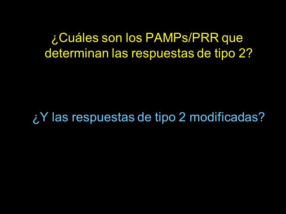 ¿Cuáles son los PAMPs/PRR que determinan las respuestas de tipo 2? ¿Y las respuestas de tipo 2 modificadas?