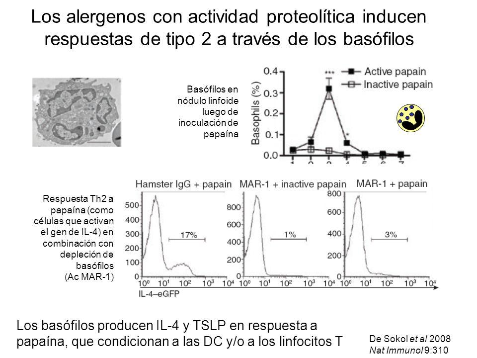 Los alergenos con actividad proteolítica inducen respuestas de tipo 2 a través de los basófilos De Sokol et al 2008 Nat Immunol 9:310 Basófilos en nód