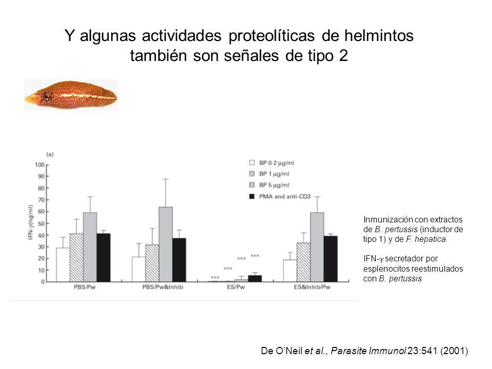 Y algunas actividades proteolíticas de helmintos también son señales de tipo 2 De ONeil et al., Parasite Immunol 23:541 (2001) Inmunización con extrac