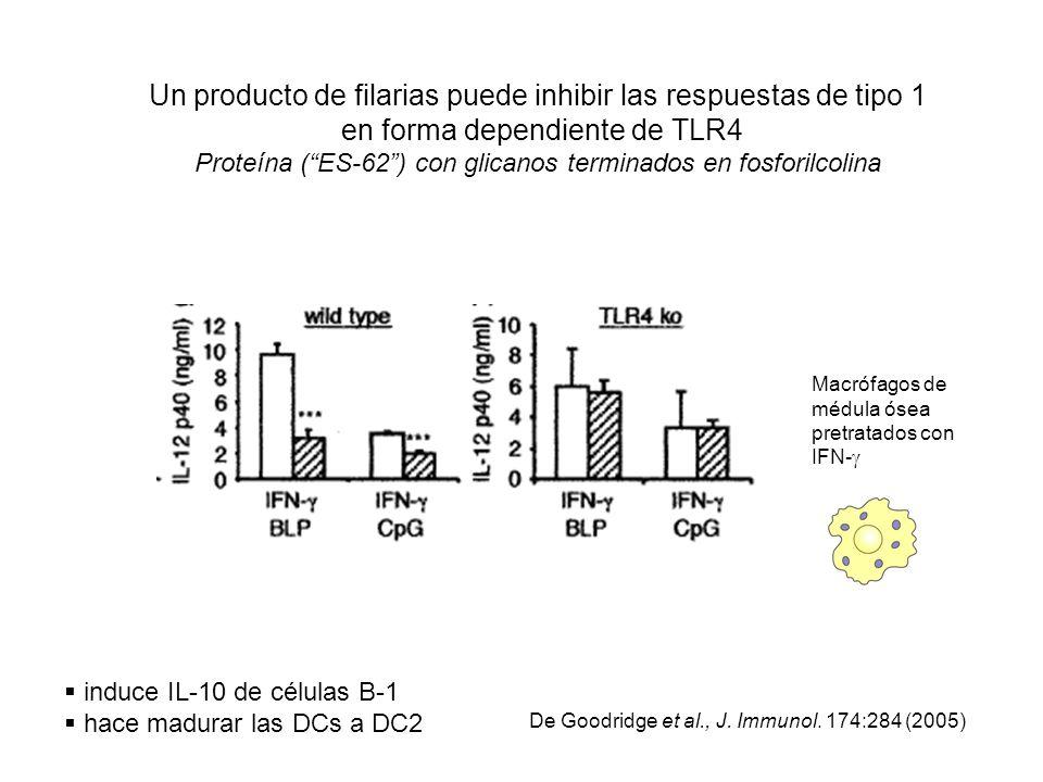 Un producto de filarias puede inhibir las respuestas de tipo 1 en forma dependiente de TLR4 Proteína (ES-62) con glicanos terminados en fosforilcolina