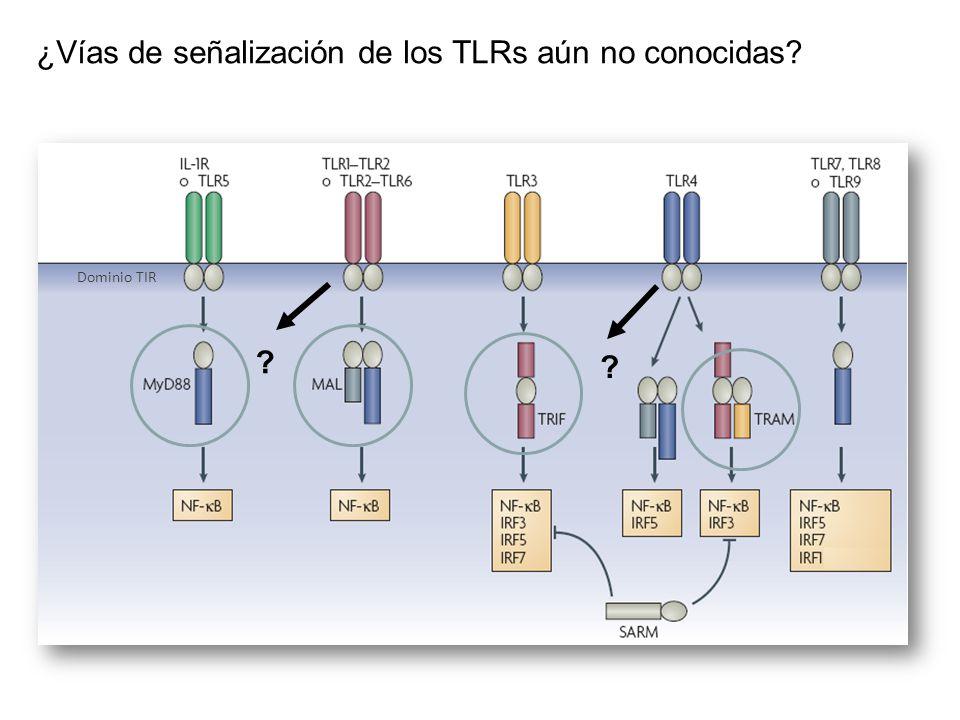 Dominio TIR ¿Vías de señalización de los TLRs aún no conocidas? ? ?