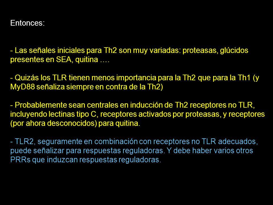 Entonces: - Las señales iniciales para Th2 son muy variadas: proteasas, glúcidos presentes en SEA, quitina …. - Quizás los TLR tienen menos importanci