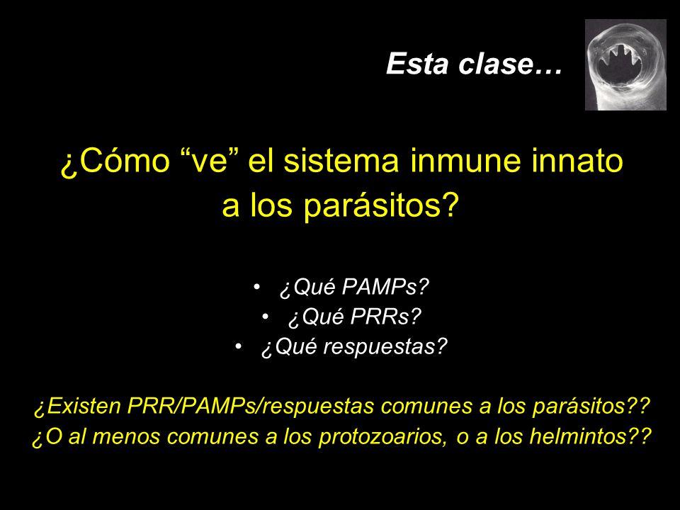 Esta clase… ¿Cómo ve el sistema inmune innato a los parásitos? ¿Qué PAMPs? ¿Qué PRRs? ¿Qué respuestas? ¿Existen PRR/PAMPs/respuestas comunes a los par
