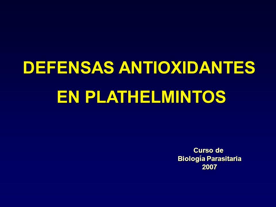 DEFENSAS ANTIOXIDANTES EN PLATHELMINTOS EN PLATHELMINTOS Curso de Biología Parasitaria 2007