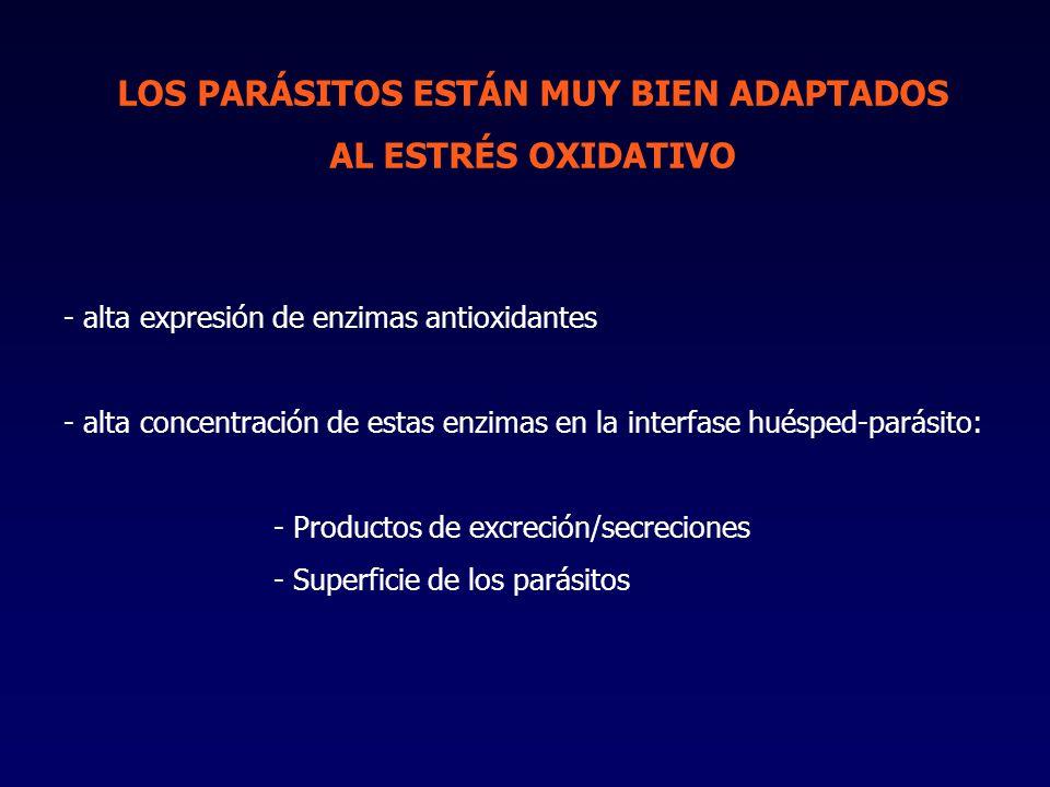 LOS PARÁSITOS ESTÁN MUY BIEN ADAPTADOS AL ESTRÉS OXIDATIVO - alta expresión de enzimas antioxidantes - alta concentración de estas enzimas en la interfase huésped-parásito: - Productos de excreción/secreciones - Superficie de los parásitos