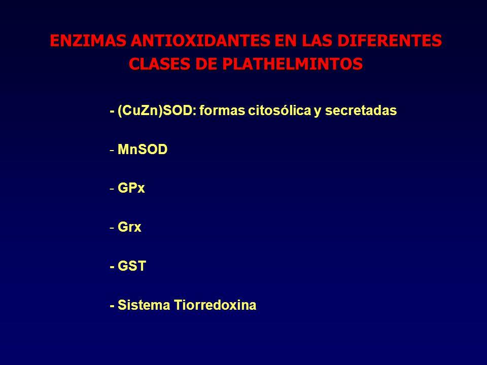 - (CuZn)SOD: formas citosólica y secretadas - - MnSOD - - GPx - - Grx - GST - Sistema Tiorredoxina ENZIMAS ANTIOXIDANTES EN LAS DIFERENTES CLASES DE PLATHELMINTOS