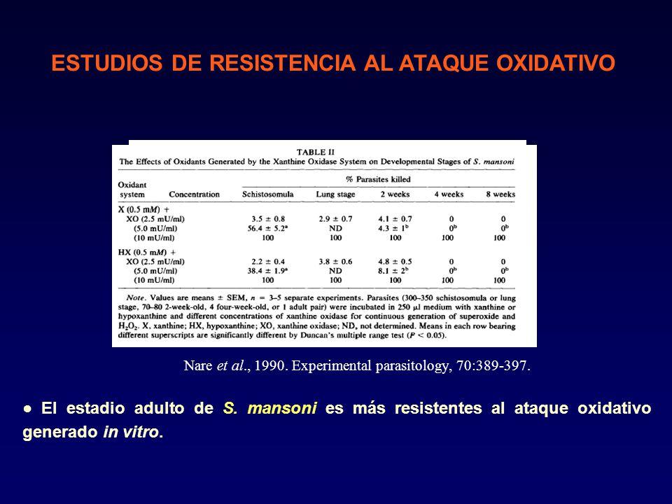 El estadio adulto de S.mansoni es más resistentes al ataque oxidativo generado in vitro.