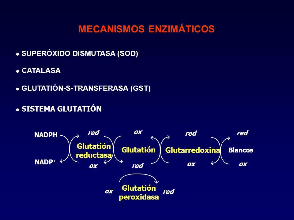 SUPERÓXIDO DISMUTASA (SOD) MECANISMOS ENZIMÁTICOS CATALASA GLUTATIÓN-S-TRANSFERASA (GST) SISTEMA GLUTATIÓN NADPH NADP + Glutatiónreductasa Glutarredoxina red ox Blancos red ox Glutatión red ox red ox Glutatión peroxidasa
