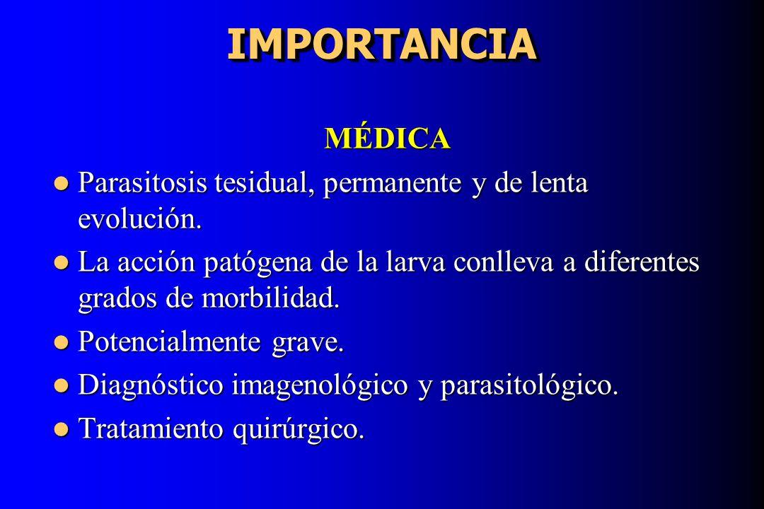 IMPORTANCIA IMPORTANCIA MÉDICA Parasitosis tesidual, permanente y de lenta evolución. Parasitosis tesidual, permanente y de lenta evolución. La acción