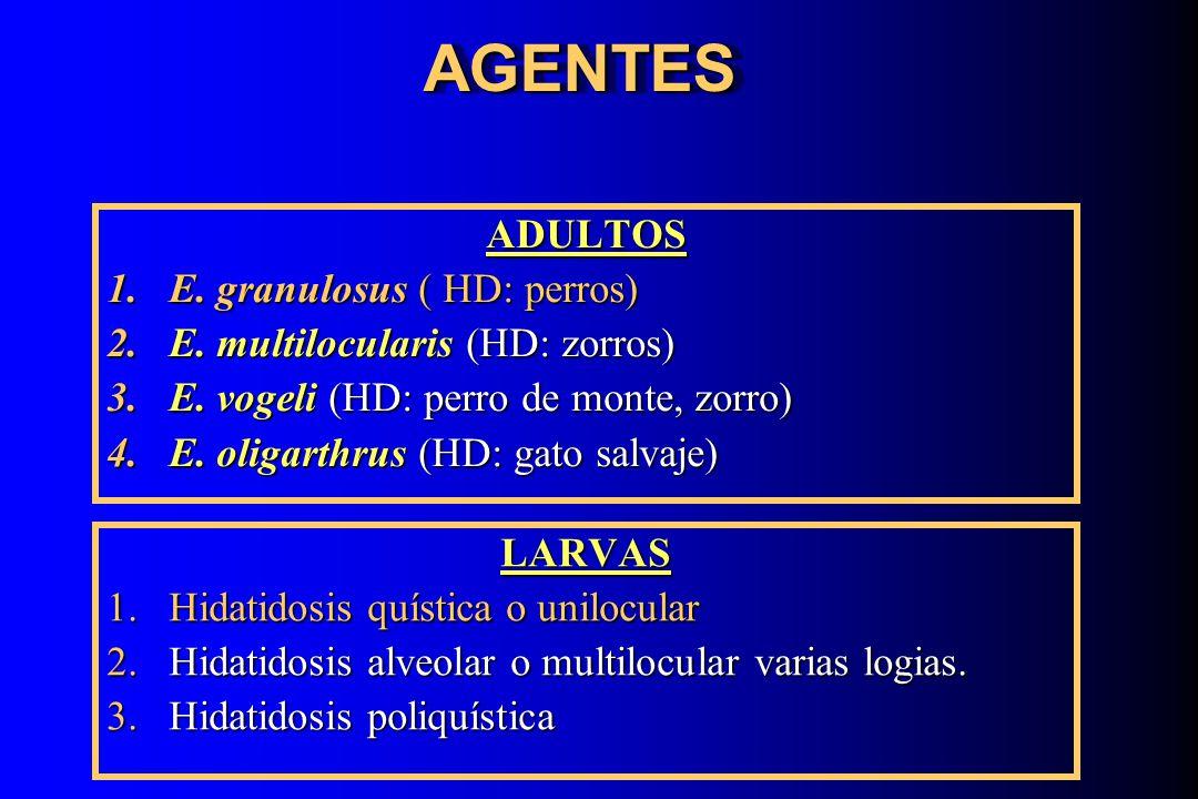 AGENTESAGENTESADULTOS 1.E. granulosus ( HD: perros) 2.E. multilocularis (HD: zorros) 3.E. vogeli (HD: perro de monte, zorro) 4.E. oligarthrus (HD: gat