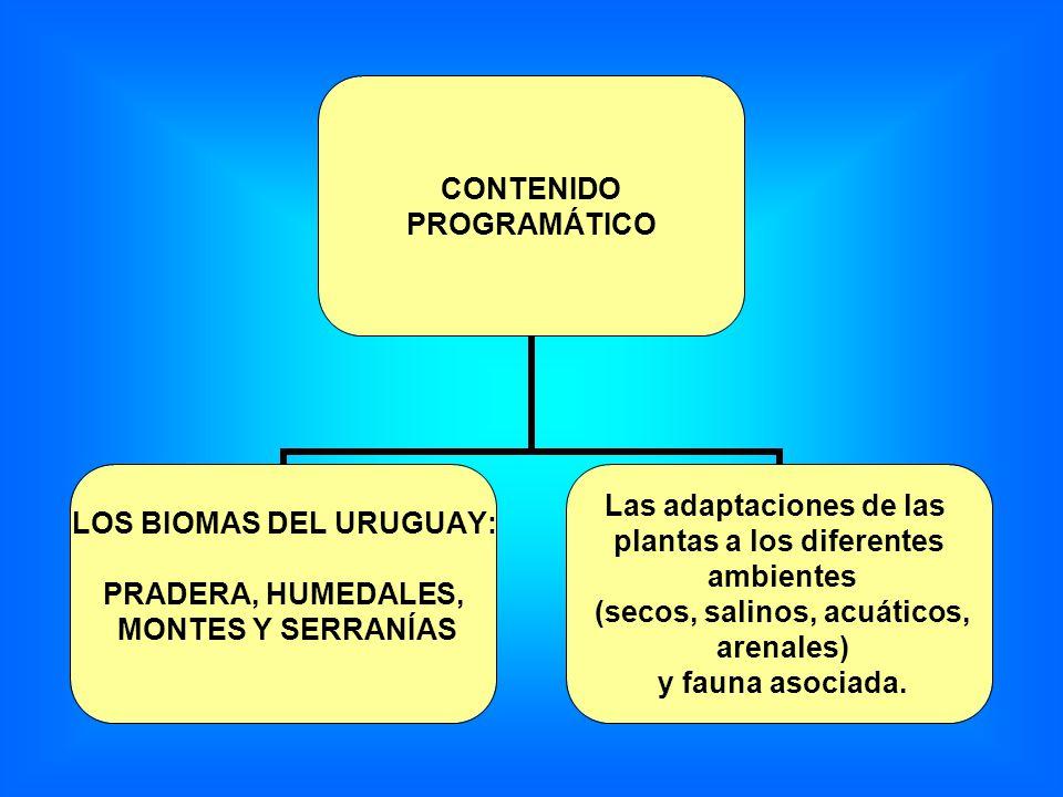 CONTENIDO PROGRAMÁTICO LOS BIOMAS DEL URUGUAY: PRADERA, HUMEDALES, MONTES Y SERRANÍAS Las adaptaciones de las plantas a los diferentes ambientes (seco