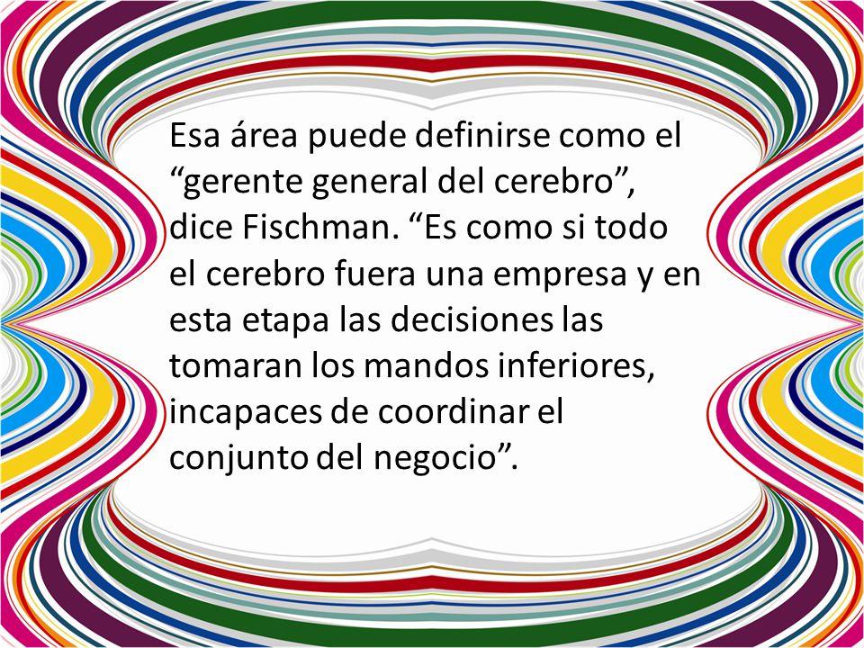 Esa área puede definirse como el gerente general del cerebro, dice Fischman. Es como si todo el cerebro fuera una empresa y en esta etapa las decision