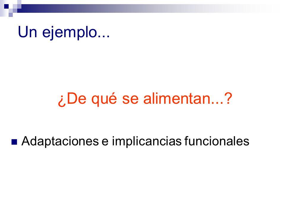 Un ejemplo... Adaptaciones e implicancias funcionales ¿De qué se alimentan...?