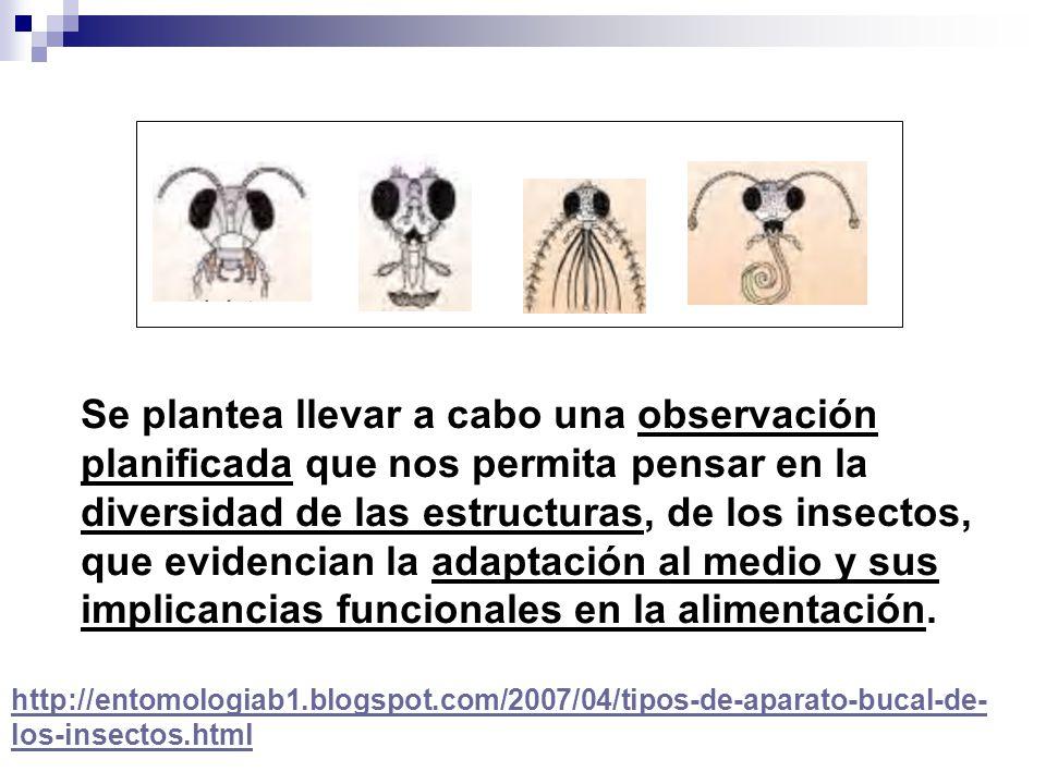 http://entomologiab1.blogspot.com/2007/04/tipos-de-aparato-bucal-de- los-insectos.html Se plantea llevar a cabo una observación planificada que nos pe
