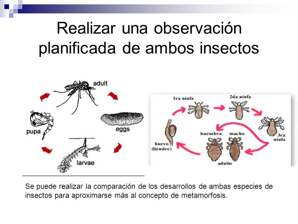 Realizar una observación planificada de ambos insectos Se puede realizar la comparación de los desarrollos de ambas especies de insectos para aproxima