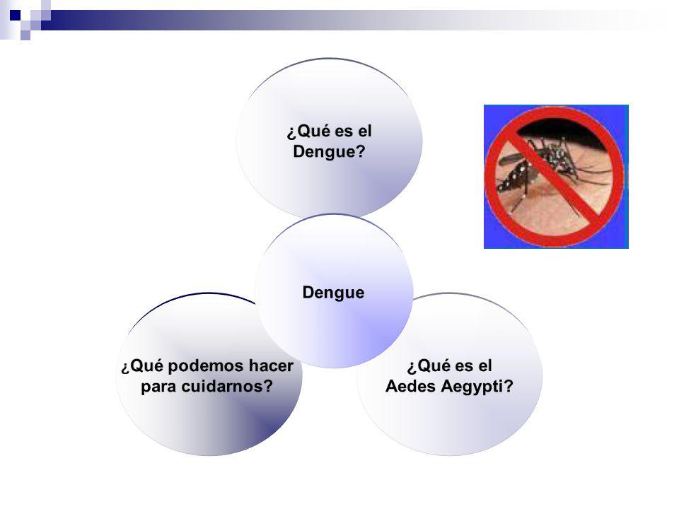 La reproducción ovípara Los insectos y otros animales ovíparos. Su metamorfosis.