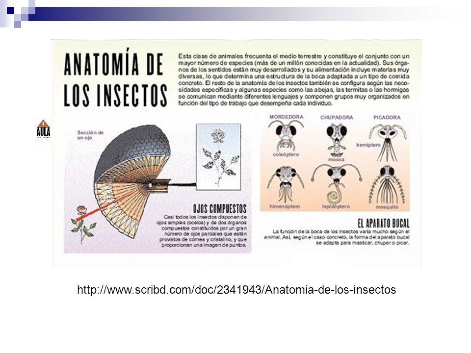 Observación de un video sobre la metamorfosis http://www.youtube.com/watch?v=NhjsJLv45o4