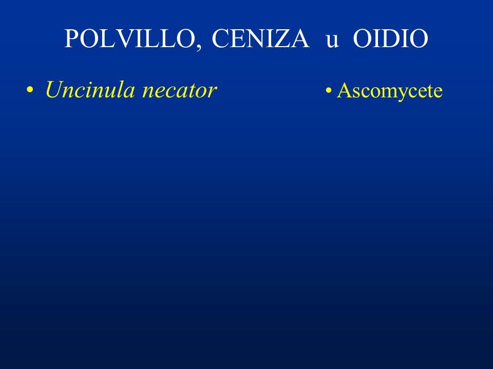 PERONOSPORA FUNGICIDAS SISTÉMICOS: Fosetil aluminio, Fosfito de potasio Metalaxil, Benalaxil Cimoxanil Dimetomorph Restricciones