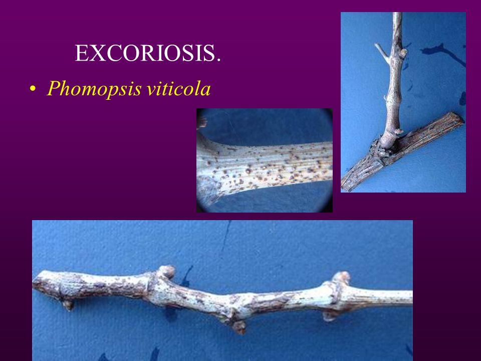 Resistencia de Botrytis cinerea a fungicidas También: Sulfamidas: diclofluanida, tolyfluanid Ftalimidas: captan, folpet Ditiocarbamatos: tiram