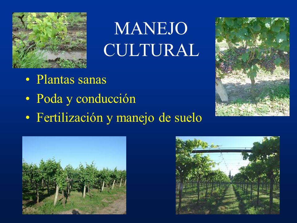MANEJO INTEGRADO Cultivar y portainjertoUbicación del viñedo Calidad sanitaria Poda y conducción Manejo de suelo y fertilización Antagonistas Fungicid