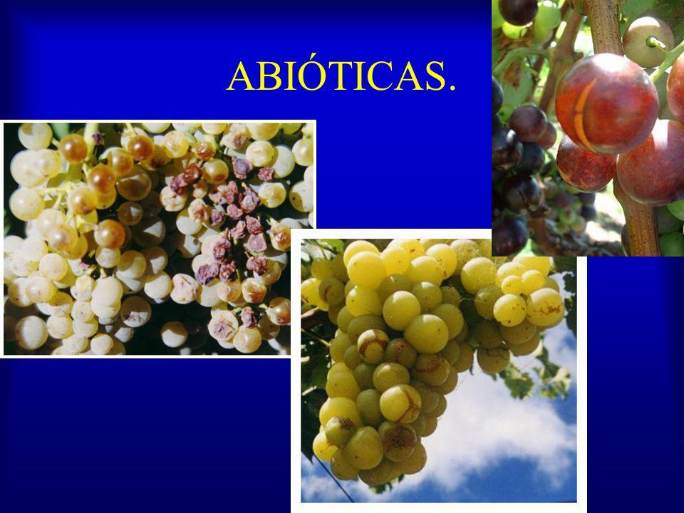 Más fungicidas Mikal, Valiente, Fosal (Fosetil aluminio), Fosfito de potasio Cimoxanil Azoxystrobin (Quadris, Amistar, Azobin) Iprodione (Rovral, Abri