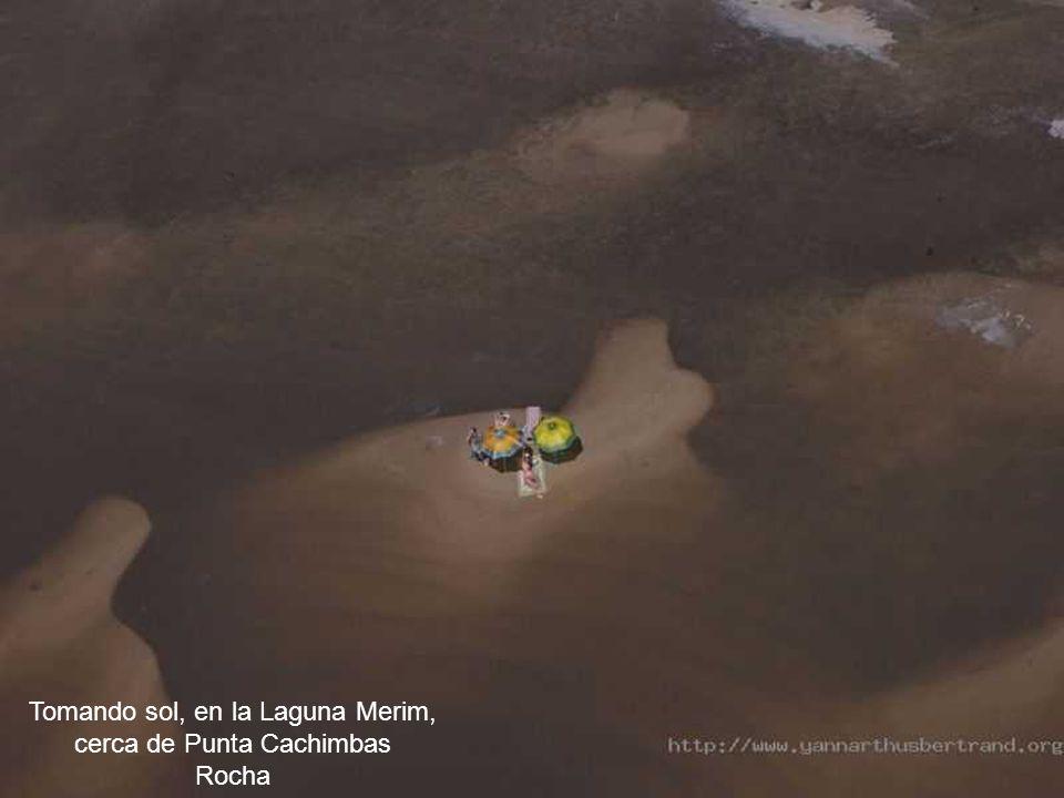 Ovejas, cerca del arroyo Arerunga, Salto