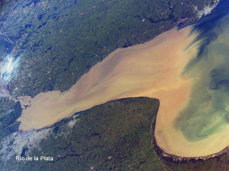 Bovinos, en Laguna Merim, cerca de Punta Magro, Rocha