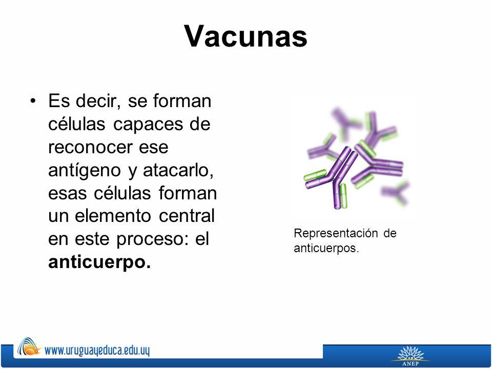 Vacunas Es decir, se forman células capaces de reconocer ese antígeno y atacarlo, esas células forman un elemento central en este proceso: el anticuerpo.