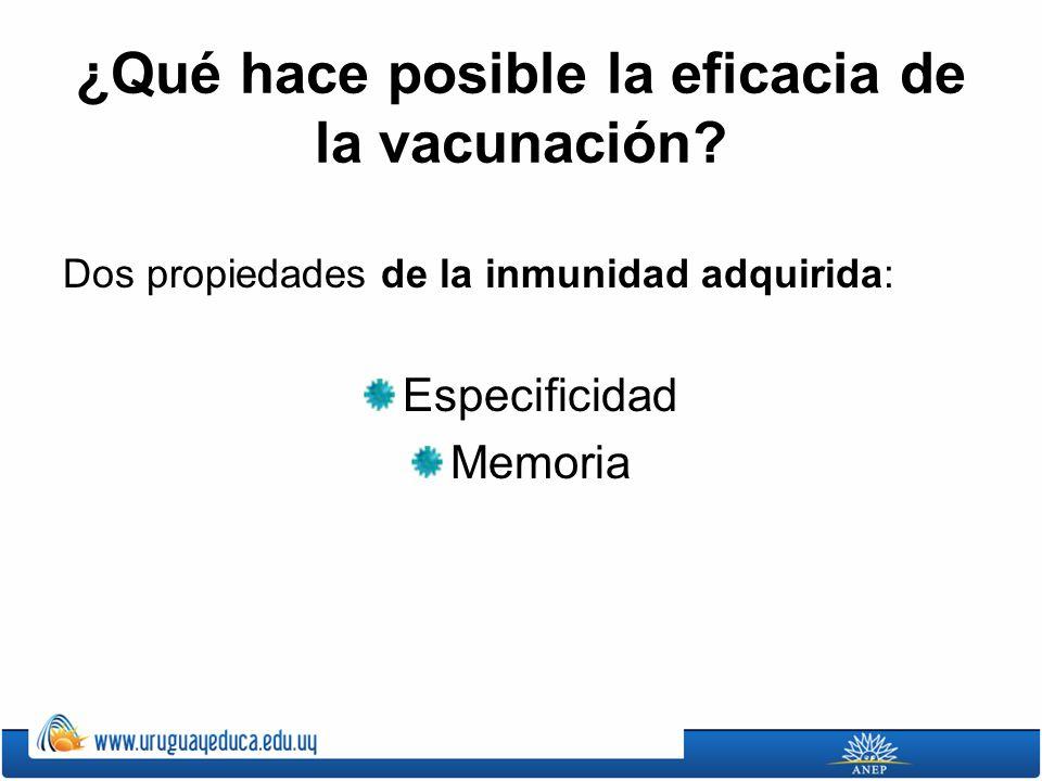¿Qué hace posible la eficacia de la vacunación? Dos propiedades de la inmunidad adquirida: Especificidad Memoria