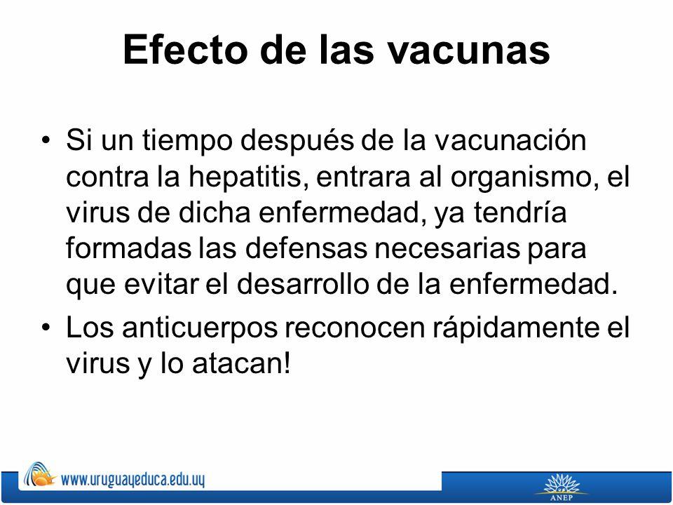 Efecto de las vacunas Si un tiempo después de la vacunación contra la hepatitis, entrara al organismo, el virus de dicha enfermedad, ya tendría formadas las defensas necesarias para que evitar el desarrollo de la enfermedad.