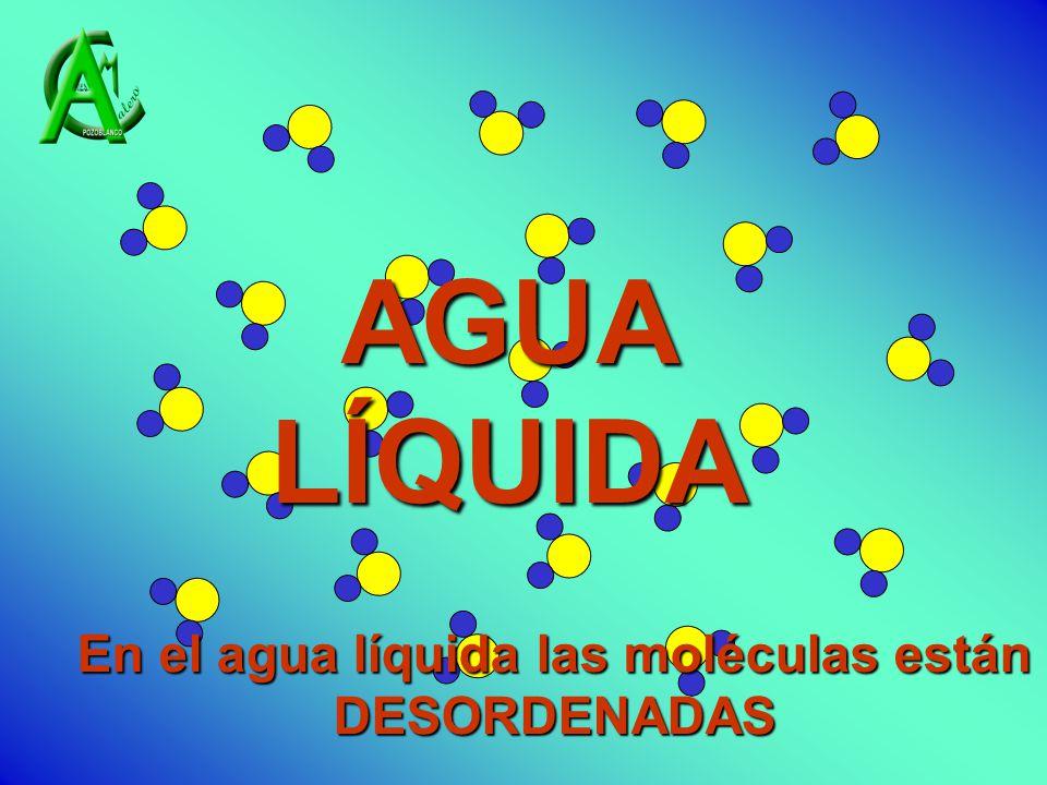 AGUA LÍQUIDA En el agua líquida las moléculas están DESORDENADAS