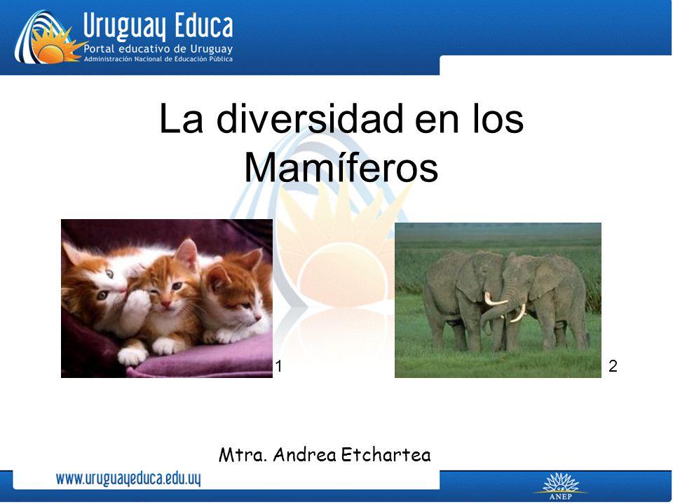 La diversidad en los Mamíferos Mtra. Andrea Etchartea 12