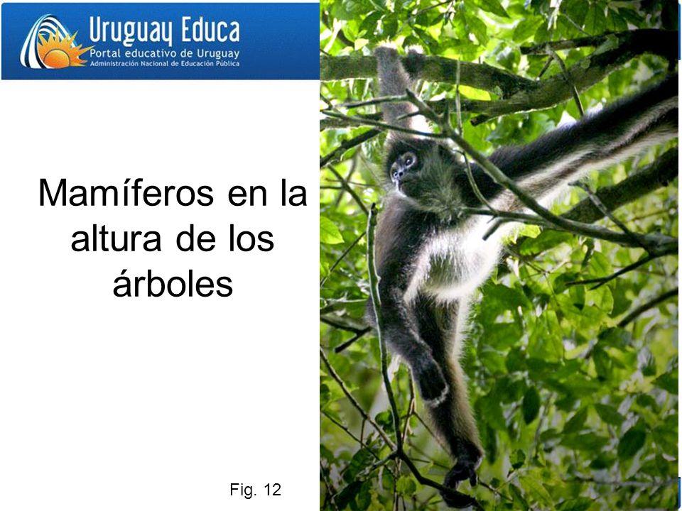 Mamíferos en la altura de los árboles Fig. 12