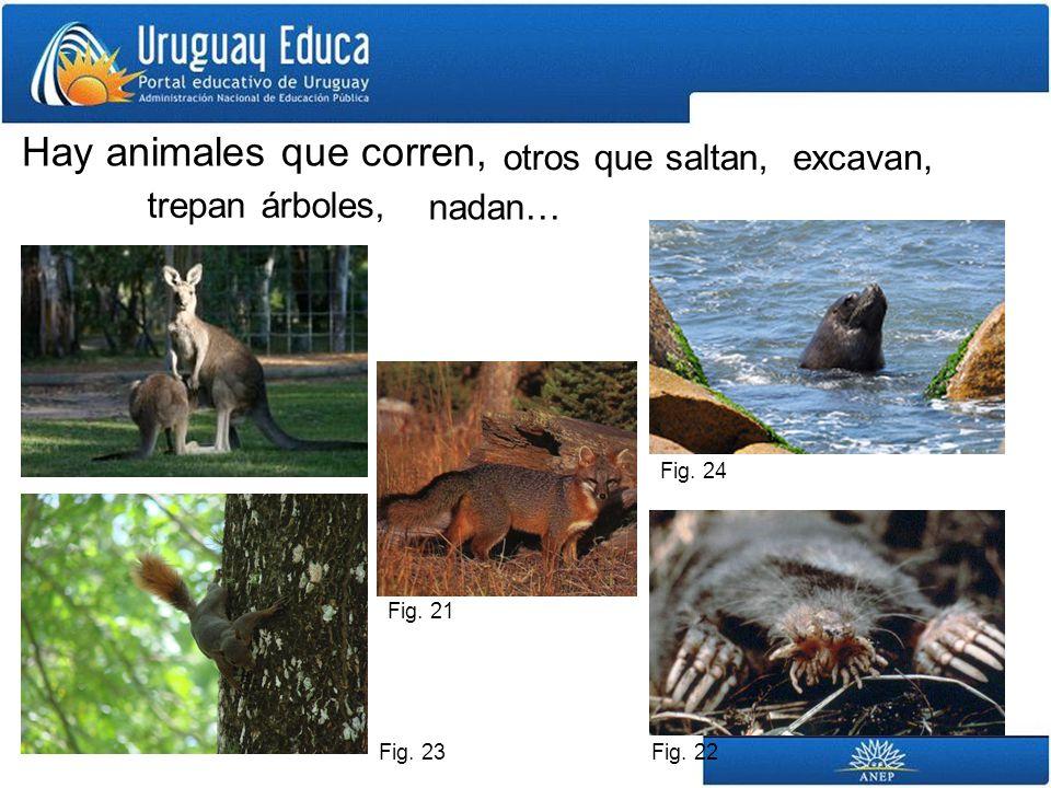 Hay animales que corren, otros que saltan,excavan, trepan árboles, nadan… Fig. 21 Fig. 22 Fig. 23 Fig. 24