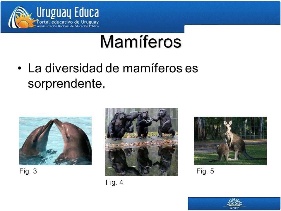 Mamíferos La diversidad de mamíferos es sorprendente. Fig. 3 Fig. 4 Fig. 5